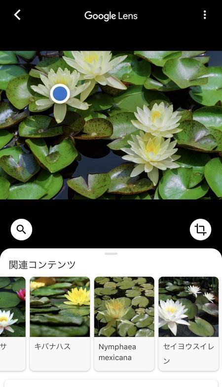 気になった花にカメラをかざせばその花の候補が表示