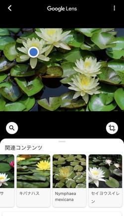 花にカメラを向けると調べられる