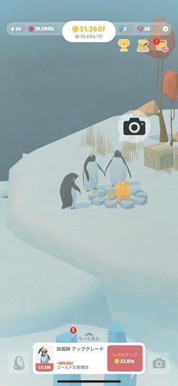 ペンギンを撮影